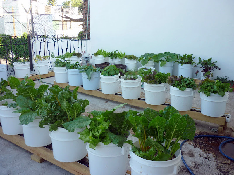 Subirrigation planter self watering insert for coubi for Fleur pas chere a planter
